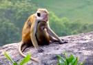 ::monkey snuggles::