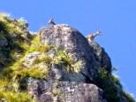 ::mountain goats::
