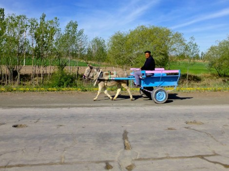 ::love the donkey carts::