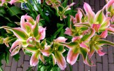 ::tulips::