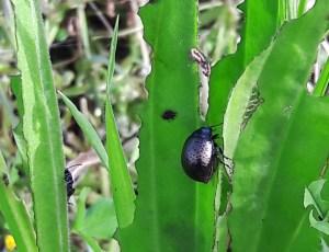 Garden bugs 20 238