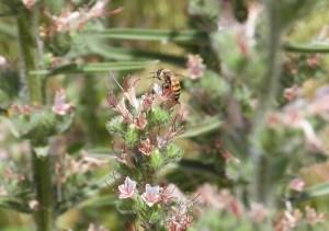 Garden bugs 238