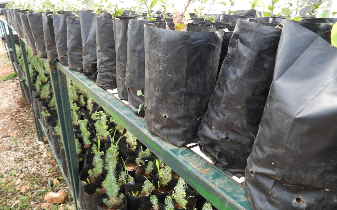 Sustainability with Native Plants, Trees, and Herbs