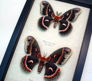 insect-displays