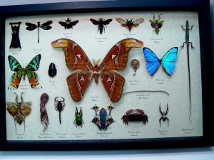 Insect Collection Land Sea Sky