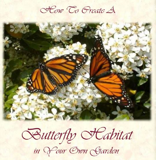 How To Create A Butterfly Habitat - Butterfly Farming Supplies