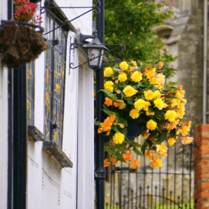 A hanging basket with flowers-Wait on God's Timing