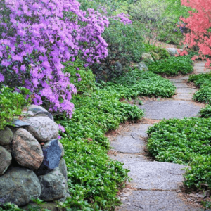 Path with flowers-purpose in life