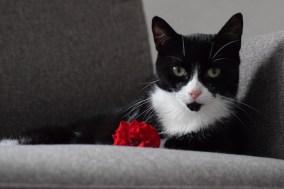 Katze und Rose
