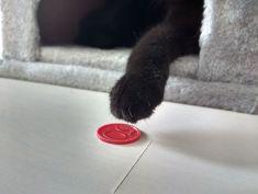 Irgendwo in der Wohnung liegt noch diese Münze.