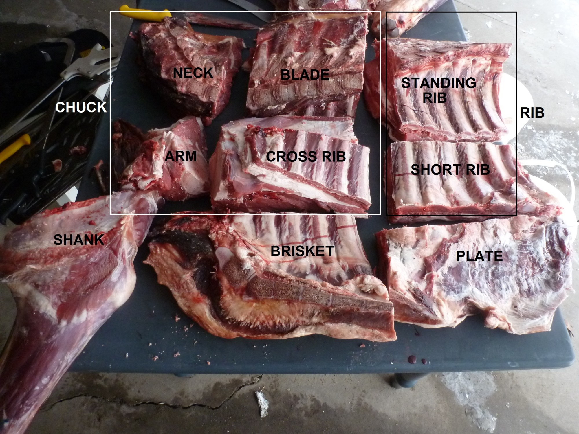 hight resolution of all the primals and subprimals on a forequarter of beef