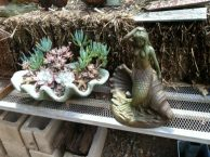 Mermaid and succulents