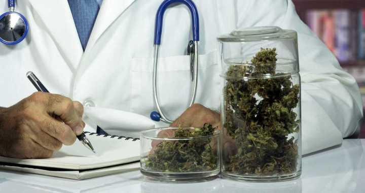 Histórico: Gobierno legalizó el autocultivo de Cannabis medicinal y expendio de aceite en farmacias
