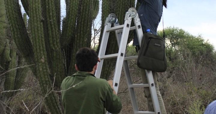 Historias detrás del ajuste en Conicet: Ángela investiga plantas en peligro de extinción en la región del Chaco