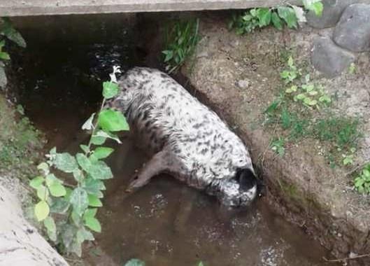 Un detenido por el envenenamiento masivo de animales en San Luis