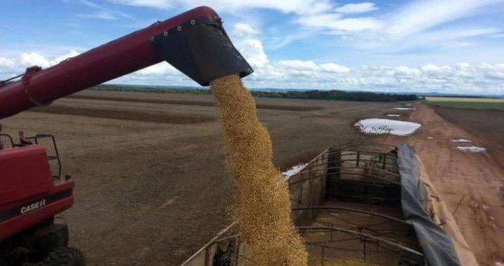 Contrabando de granos: los gendarmes cobraban coimas de $150 mil por camión
