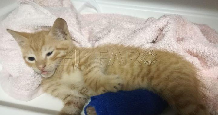 Metán: imputan a dos personas por intentar matar a un gatito