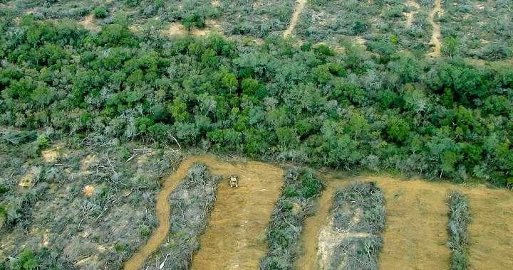 Guiño a los desmontes: Salta flexibiliza controles de cambio de suelo