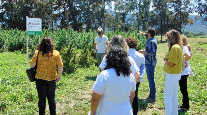 Jujuy podría comenzar a expender aceite de cannabis en farmacias desde septiembre