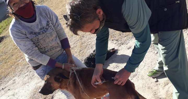 En septiembre se castraron 1266 animales y 3254 fueron vacunados contra la rabia