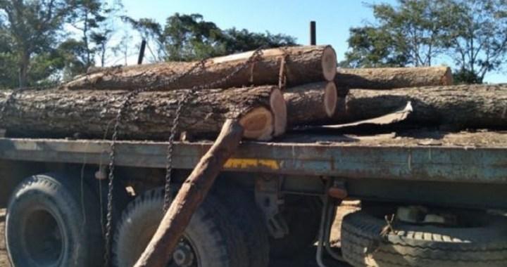 Empresarios y ex funcionarios de Salta procesados por tala ilegal e intento de contrabando