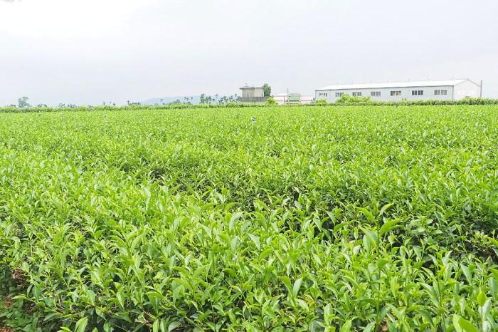 <彰化南投> 花仙子趣農村,八卦山花香品茶之旅,走進農村貼近自然生態,茶香碉堡農遊樂!