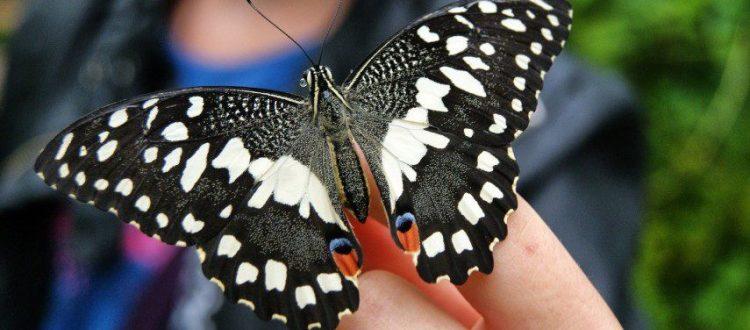 fengshui-butterfly