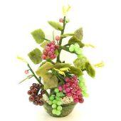 Fruitful Grapes Jade Plant1