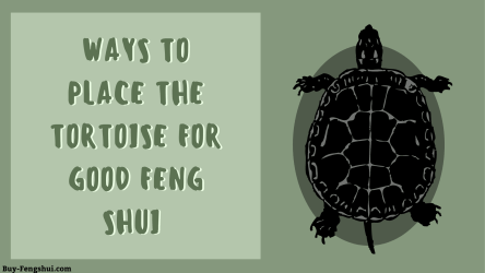 Ways to place the tortoise for good feng shui