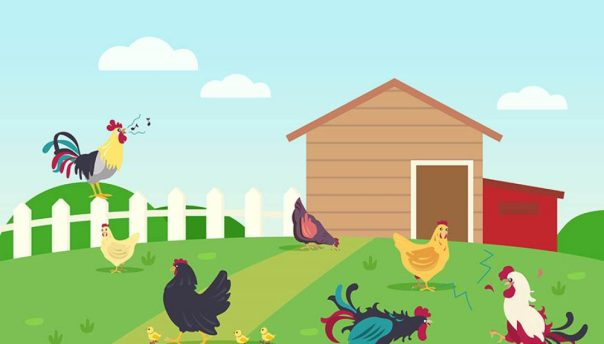 Rooster Horoscope Predictions 2022