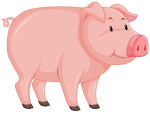 Cute pig with pink skin on white background illustration
