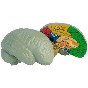 Learning Resources - Cross Section Foam Human Brain Model - 130mm ...