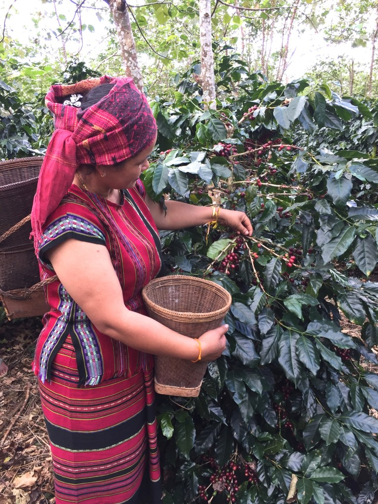 Hand Picked Coffee