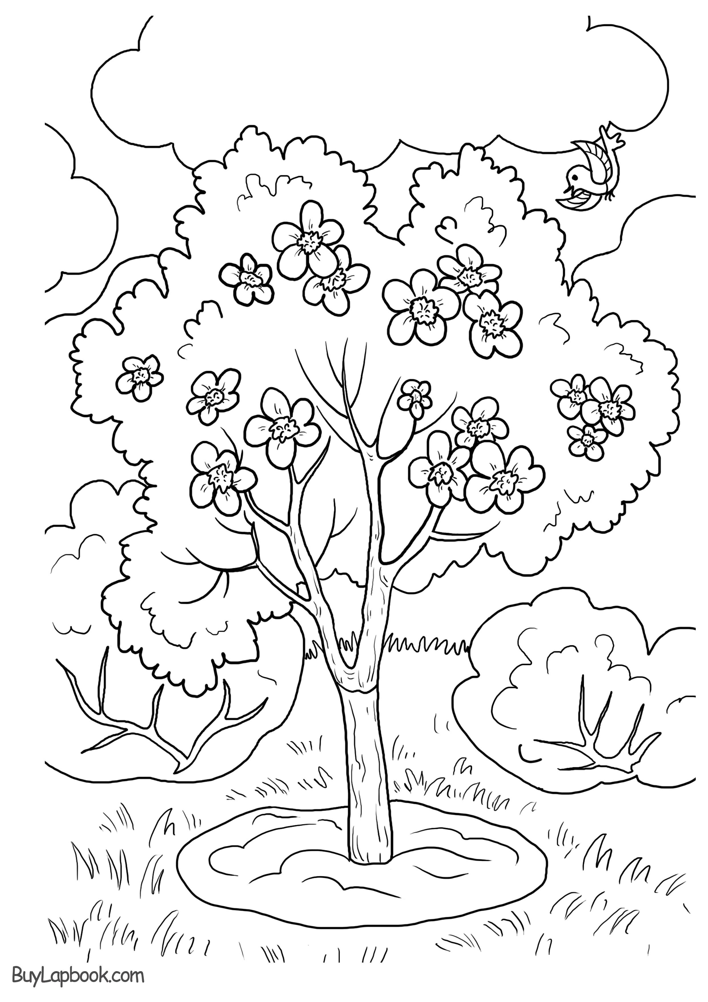 An Apple Tree Life Cycle