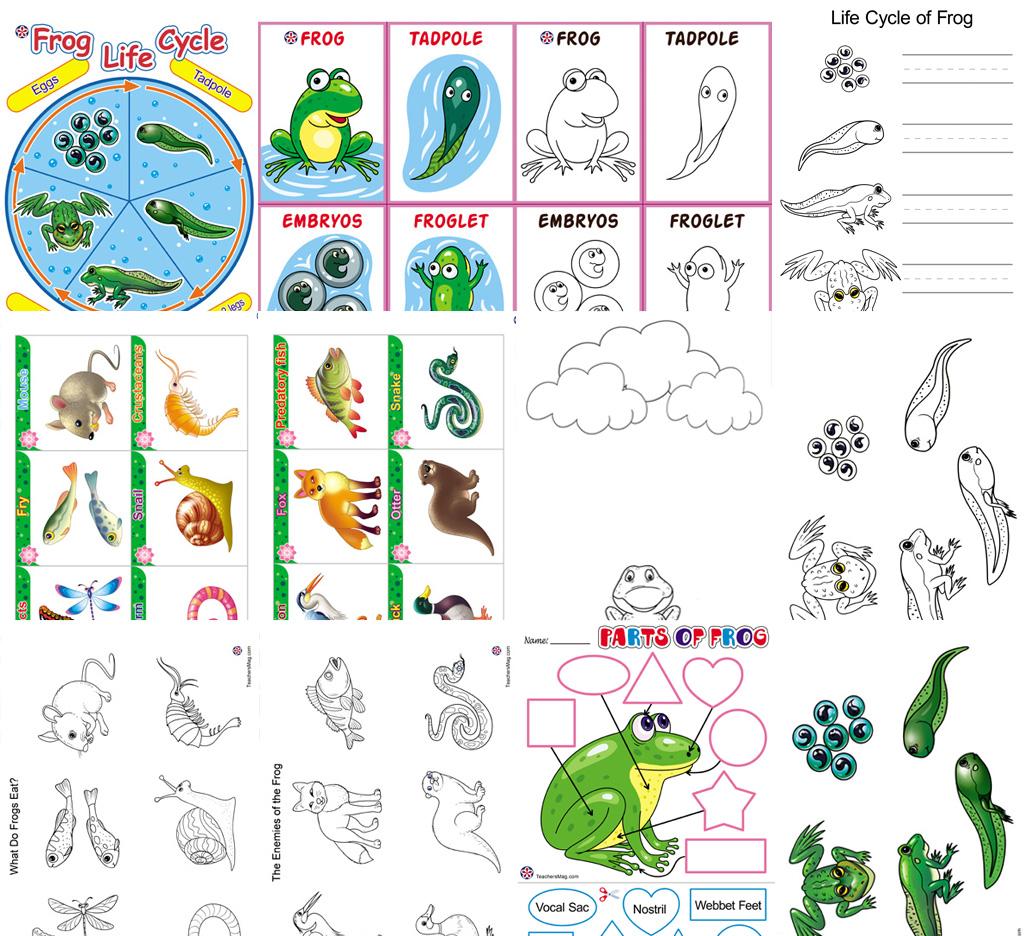 Frog Theme Activities Buylapbook