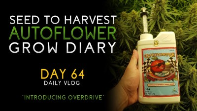 Day 64 – Introducing Overdrive ! – From Seed to Harvest – Autoflower – Advanced Nutrients