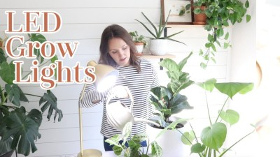 LED Grow Light Bulb | House Plant Light | How To Use Grow Lights With Indoor House Plants