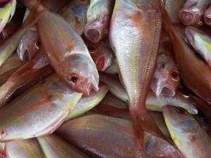 Fishy Smell=No Sale