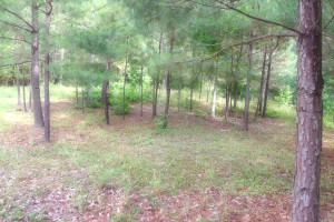Country Cabin For Sale in Neches, TX