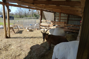 - Land/ Animal Farm for Sale