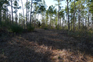 Lot 8, Neches Trace, Palestine Tx 75801 - Lot for Sale