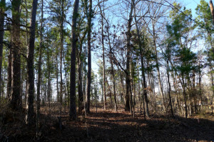 1 Acre Lot Palestine Tx 75801 - Land for Sale #10