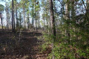 1 Acre Lot Palestine Tx 75801 - Land for Sale