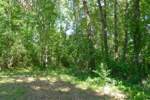 Cabin on ~10 Acres in Montalba, TX-For Sale