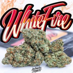 buy jungle boys weed online Canada, jungle boys for sale Canada, buy white fire jungleboys,order jungle boys in Canada, order white fire jungleboys