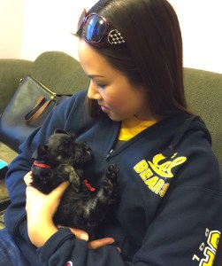 dog michelle tsai, & sadie
