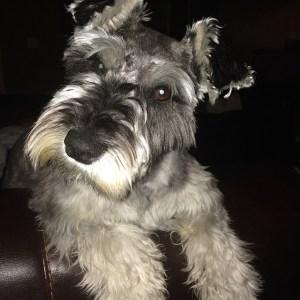 Dog Quijote daniel gonsales