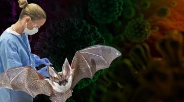 Bilim insanları yeni bir virüs buldu… Yine Çin yine yarasalar!