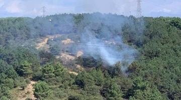 İstanbul Sultangazi'de ormanlık alanda yangın çıktı!