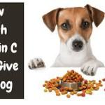 Attention Pet Lovers: What's Really in Your Pet Food – 11 Ingredients to Avoid